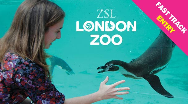 london zoo lp